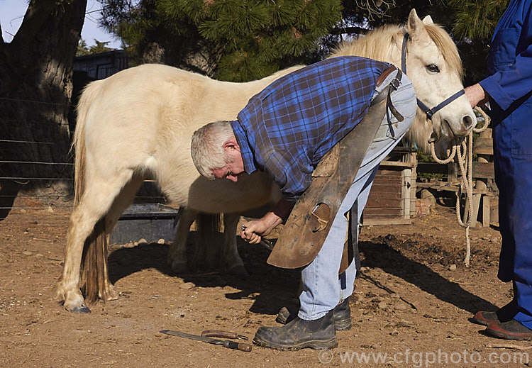 the hooves of horses are particularly prone It's not just your farrier who's responsible for keeping your horse's hooves healthy you play a role too main factors that impact horse hoof health horses' hooves are made up of protein and keratin (the same stuff that makes up hair) like a horse's hair coat, hooves will grow faster when days are longer.